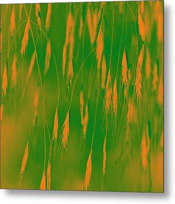 Orange Grass Spikes Metal Print by Heiko Koehrer-Wagner