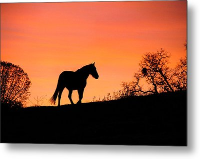 Orange Sunrise Metal Print by Stephanie Laird
