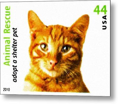 Orange Tabby Cat Metal Print by Lanjee Chee
