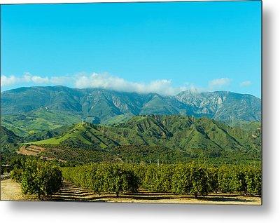 Orange Tree Grove, Santa Paula, Ventura Metal Print by Panoramic Images