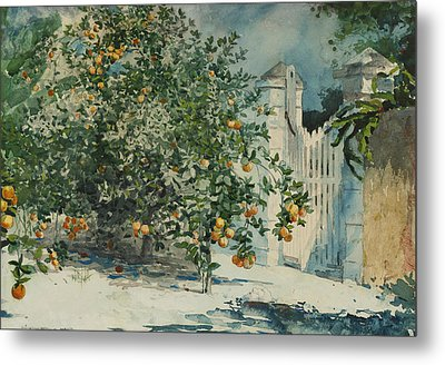 Orange Trees And Gate Metal Print by Winslow Homer