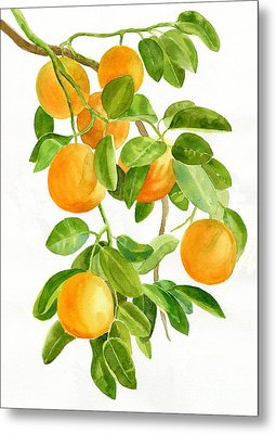 Oranges On A Branch Metal Print by Sharon Freeman