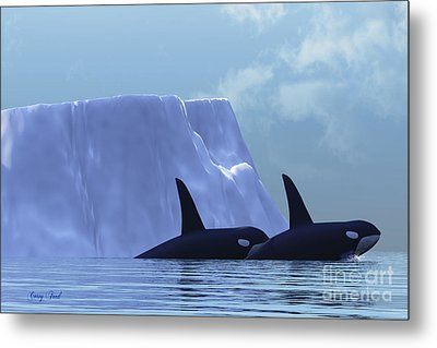 Orca Metal Print by Corey Ford