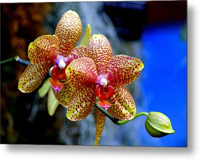 Orchid 17 Metal Print by Marty Koch