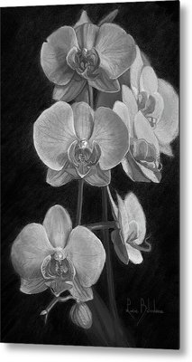 Orchids - Black And White Metal Print by Lucie Bilodeau
