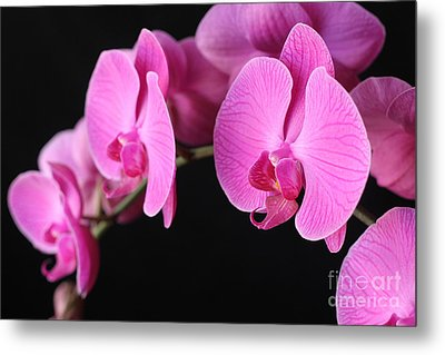 Orchids In Bloom Metal Print by Angie Bechanan