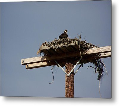 Osprey Nest Metal Print by Laurie Kidd