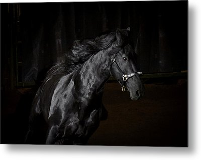 Out Of The Darkness D4367 Metal Print by Wes and Dotty Weber