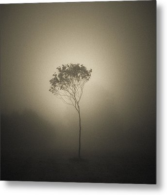 Out Of The Gloom Metal Print by Chris Fletcher
