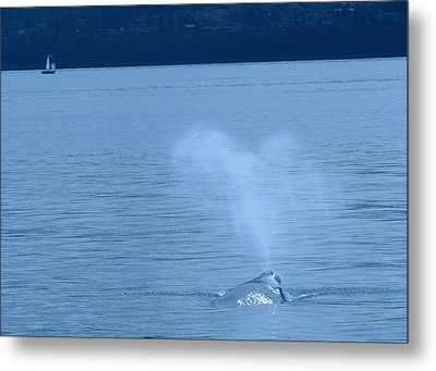 Out The Blow Hole  Metal Print by Jeff Swan