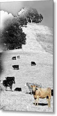 Out West Metal Print by Monroe Snook