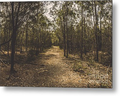 Outback Queensland Bush Walking Track Metal Print by Jorgo Photography - Wall Art Gallery