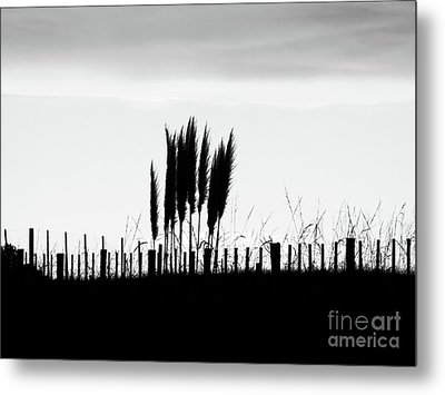 Over The Fence Metal Print by Karen Lewis