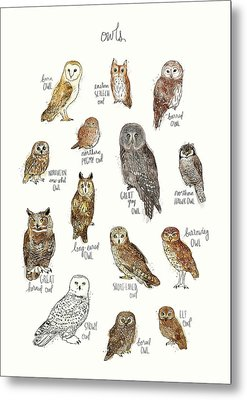 Owls Metal Print by Amy Hamilton