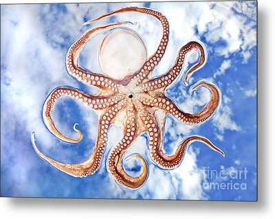 Pacific Octopus Metal Print by Mike Raabe