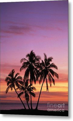 Palm Cluster Metal Print by Allan Seiden - Printscapes