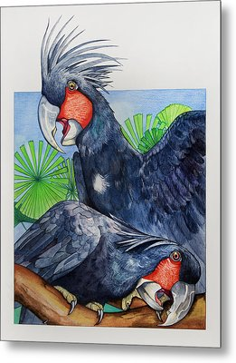 Palm Cockatoos Metal Print by Robert Lacy