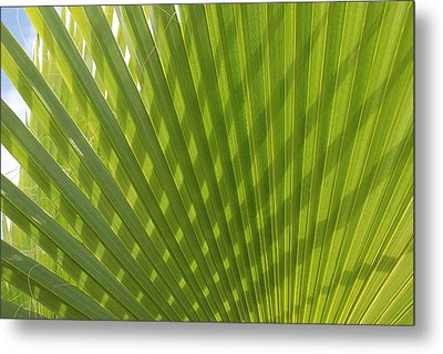 Palm Fingers Metal Print by Dallas Hyatt