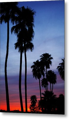 Palm Trees At Sunset Metal Print by Jill Reger