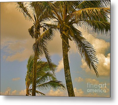 Palm Trees Metal Print by Silvie Kendall