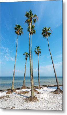 Palms Up Metal Print by Marvin Spates