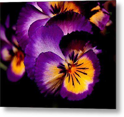 Pansies Metal Print by Rona Black