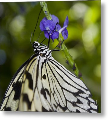 Paper Kite Butterfly Metal Print by Heather Applegate