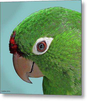 Parrot Portrait Metal Print by Larry Linton