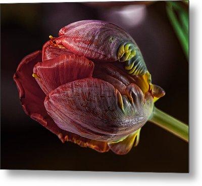 Parrot Tulip 4 Metal Print by Robert Ullmann