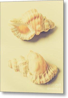 Pastel Seashell Fine Art Metal Print by Jorgo Photography - Wall Art Gallery