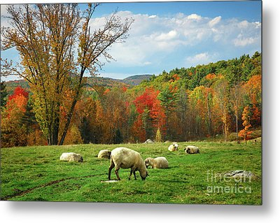 Pasture - New England Fall Landscape Sheep Metal Print by Jon Holiday