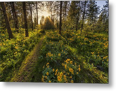 Path To The Golden Light Metal Print by Mark Kiver