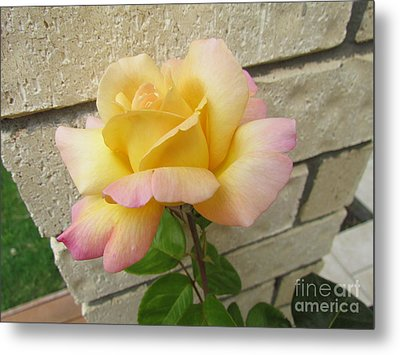 Peace Rose Metal Print by Joyce Woodhouse