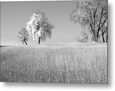 Peaceful Metal Print by James Steele