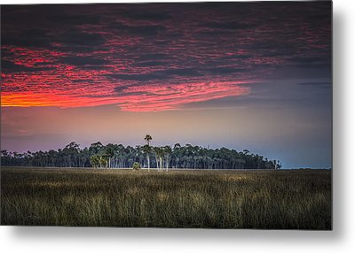 Peaceful Palms Metal Print by Marvin Spates