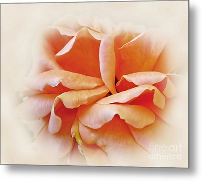 Peach Delight Metal Print by Kaye Menner