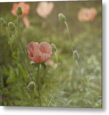 Peachy Poppies Metal Print by Rebecca Cozart