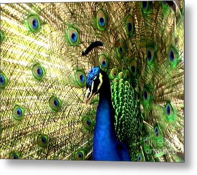 Peacock Metal Print by Toon De Zwart