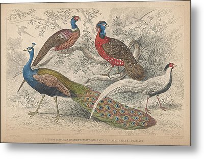Peacocks Metal Print by Oliver Goldsmith