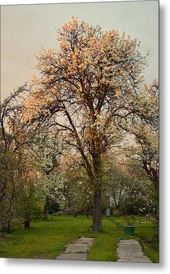 Pear Spring Sunrise Metal Print by Henryk Gorecki