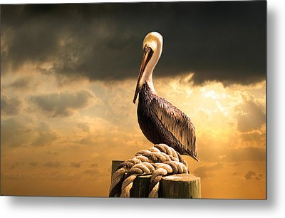 Pelican After A Storm Metal Print by Mal Bray