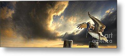 Pelican Evening Metal Print by Meirion Matthias