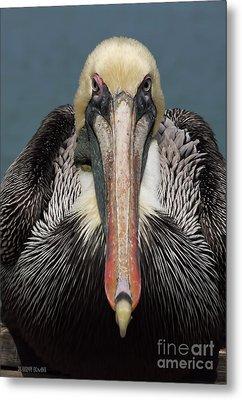 Pelican Stare Metal Print by Deborah Benoit