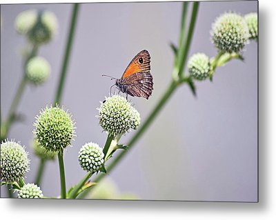 Perched Butterfly No. 255-1 Metal Print by Sandy Taylor