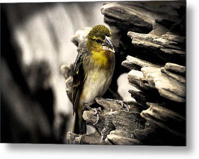 Perched Metal Print by Martin Newman
