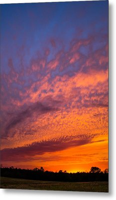 Perfection Metal Print by Shelby Young