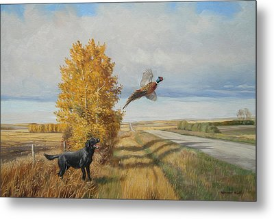 Pheasant Flush Metal Print by Norman Kelly