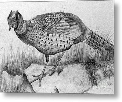 Pheasant In The Wild Metal Print by Roy Anthony Kaelin