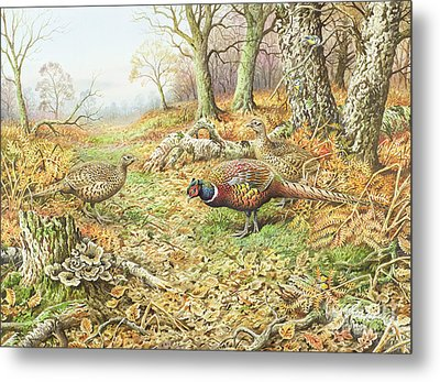 Pheasants With Blue Tits Metal Print by Carl Donner