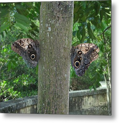 Photography Of Butterfly Symmetry Metal Print by Mario  Perez
